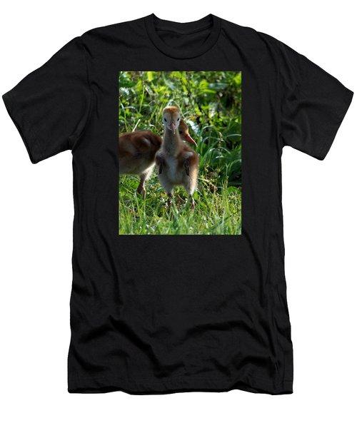 Sandhill Crane Chick 086  Men's T-Shirt (Athletic Fit)