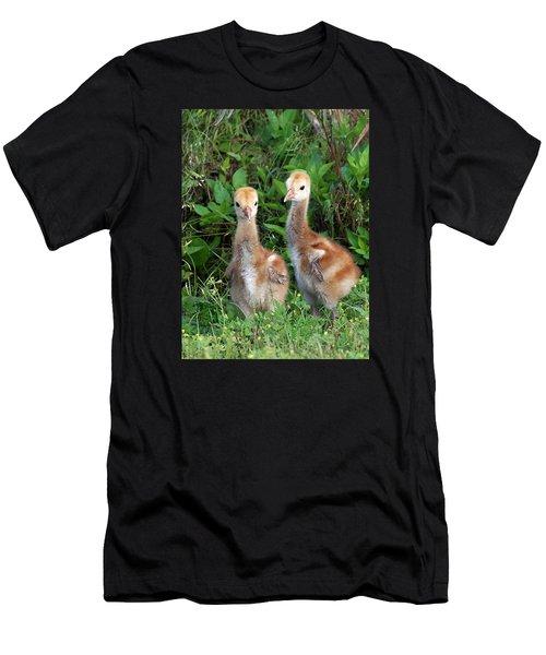 Sandhill Crane Chicks Men's T-Shirt (Slim Fit) by Chris Mercer