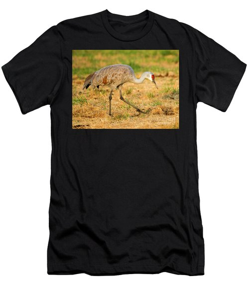 Sandhill Crane Grazing Men's T-Shirt (Athletic Fit)