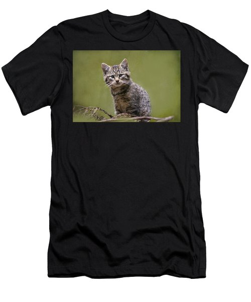 Scottish Wildcat Kitten Men's T-Shirt (Athletic Fit)