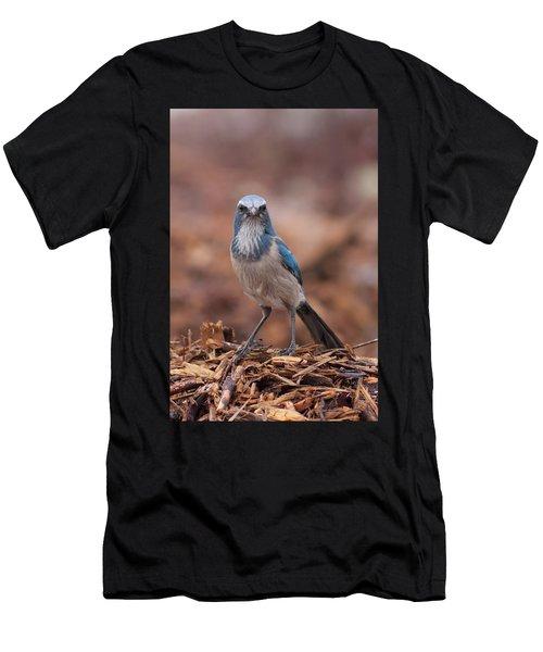 Scrub Jay On Chop Men's T-Shirt (Athletic Fit)