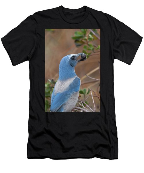 Scrub Jay With Acorn Men's T-Shirt (Athletic Fit)