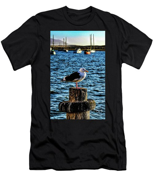 Seagull Perch Men's T-Shirt (Athletic Fit)