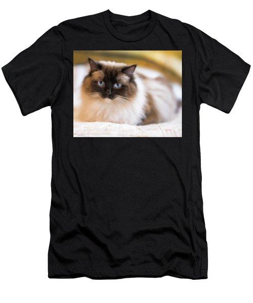 Seal Point Bicolor Ragdoll Cat Men's T-Shirt (Athletic Fit)