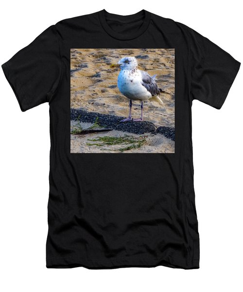 See The Gull Men's T-Shirt (Athletic Fit)