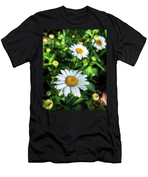 Shasta Daisy Men's T-Shirt (Athletic Fit)
