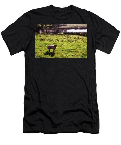 Sheep In Eniskillen Men's T-Shirt (Athletic Fit)