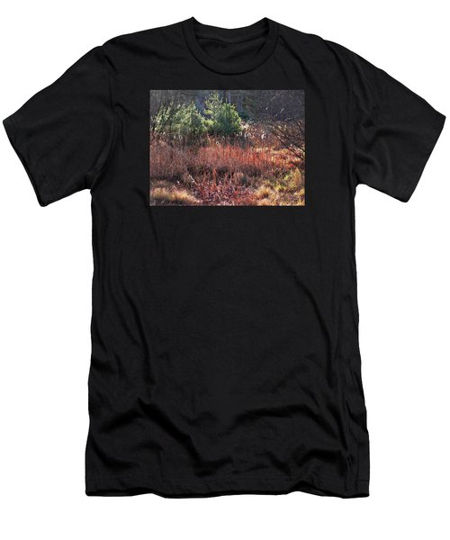 Shimmering Sunlight On The Cattails Men's T-Shirt (Athletic Fit)