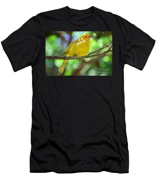 Sicalis Flaveola Men's T-Shirt (Athletic Fit)