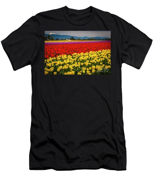 Skagit Valley Tulips  Men's T-Shirt (Athletic Fit)