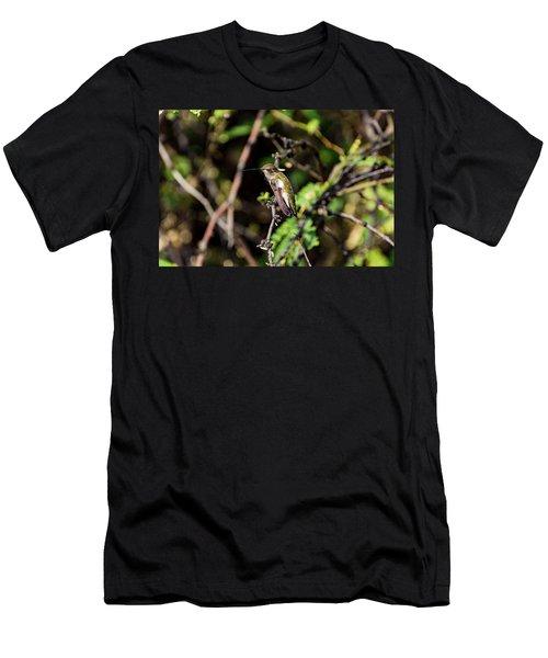 Sleepy Hummingbird Men's T-Shirt (Athletic Fit)