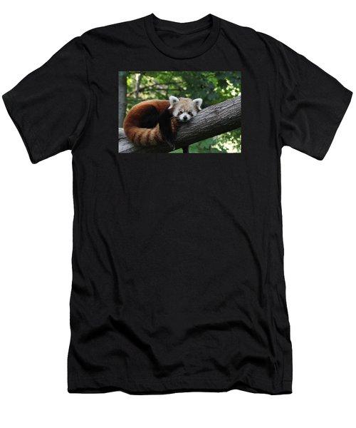 Sleepy Red Panda Men's T-Shirt (Athletic Fit)