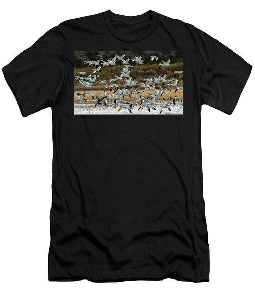 Snow Geese Flock In Flight Men's T-Shirt (Athletic Fit)