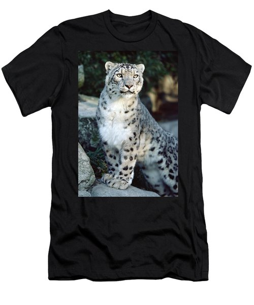 Snow Leopard Uncia Uncia Portrait Men's T-Shirt (Athletic Fit)