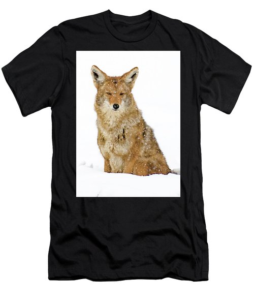 Snowy Coyote Men's T-Shirt (Athletic Fit)