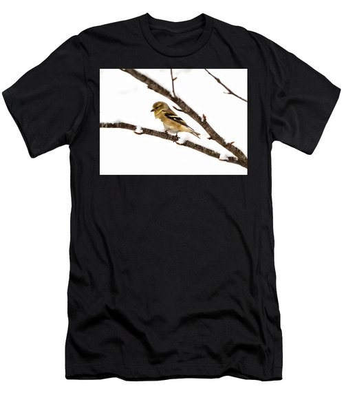 Snowy Day Goldfinch Men's T-Shirt (Athletic Fit)