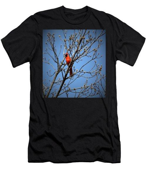 Songbird Men's T-Shirt (Athletic Fit)