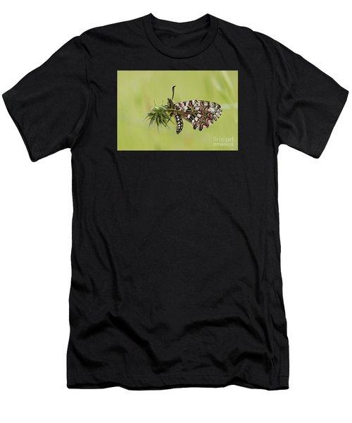Spanish Festoon Butterfly Men's T-Shirt (Athletic Fit)