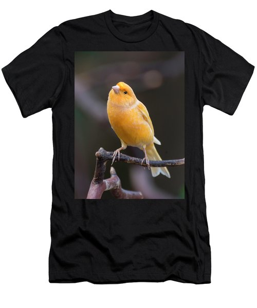 Spanish Timbrado Canary Men's T-Shirt (Athletic Fit)