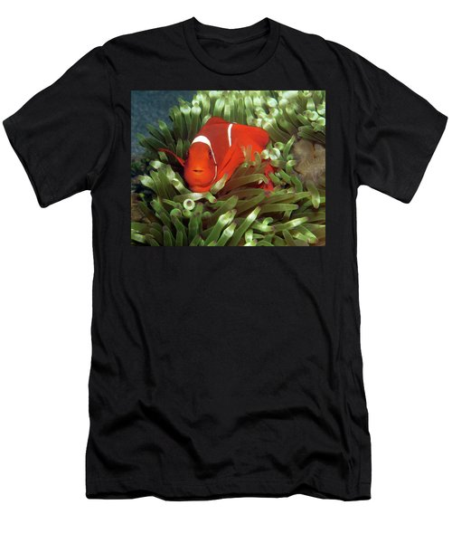 Spinecheek Anemonefish, Indonesia 2 Men's T-Shirt (Athletic Fit)
