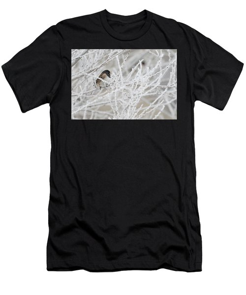 Spotted Towhee In Winter Men's T-Shirt (Athletic Fit)
