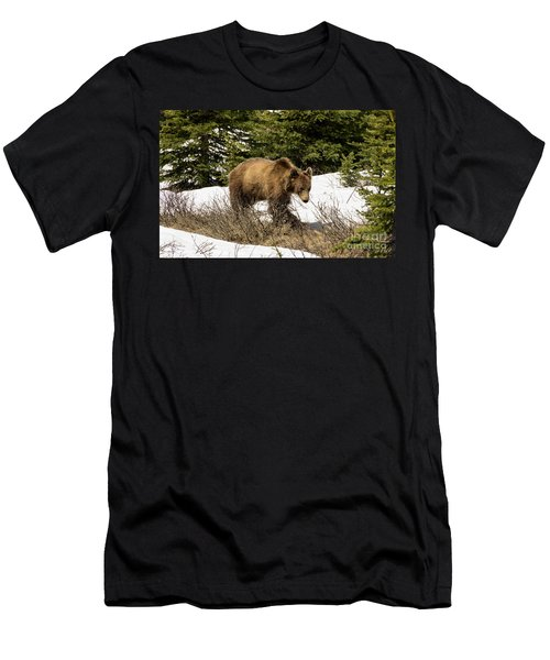 Spring Grizzly Men's T-Shirt (Athletic Fit)