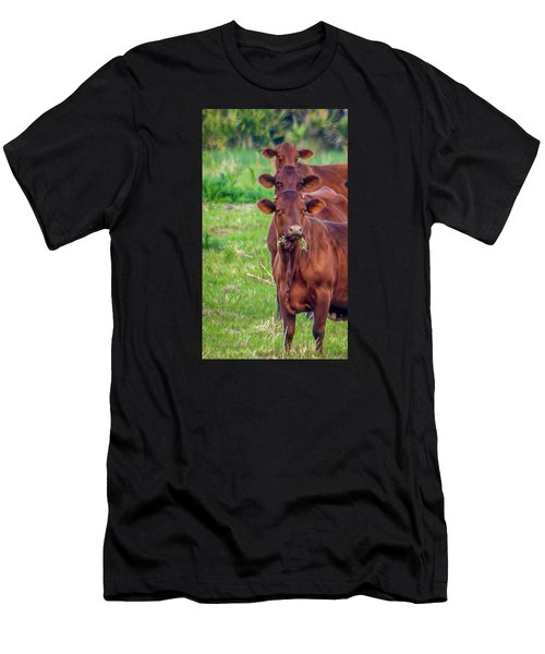 Stacked Up Cows          Men's T-Shirt (Athletic Fit)