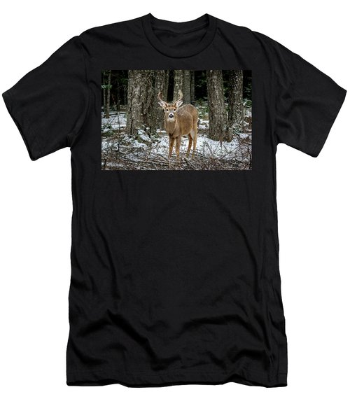 Staring Buck Men's T-Shirt (Athletic Fit)