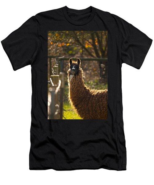 Staring Llama Men's T-Shirt (Athletic Fit)