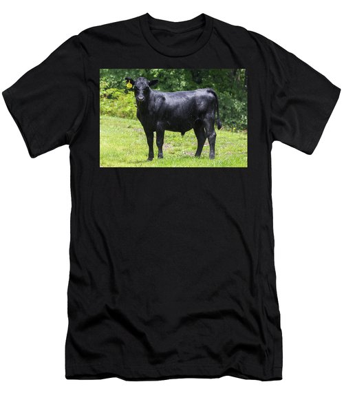 Staring Steer Men's T-Shirt (Athletic Fit)