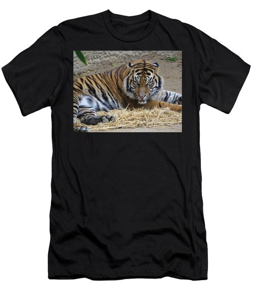 Staring Tiger Also Men's T-Shirt (Athletic Fit)