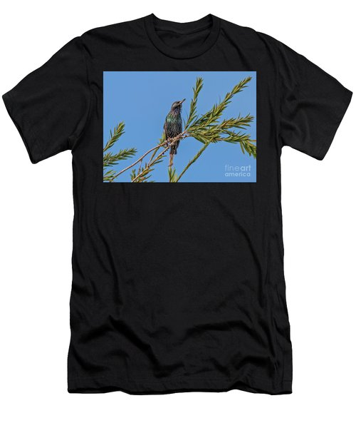 Starling Men's T-Shirt (Athletic Fit)