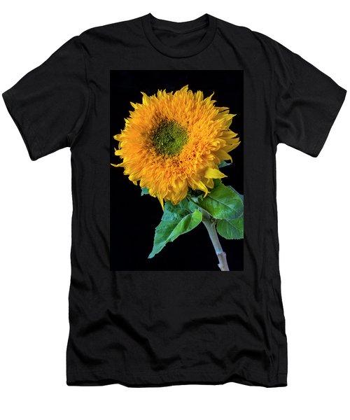 Stately Sunflower Men's T-Shirt (Athletic Fit)