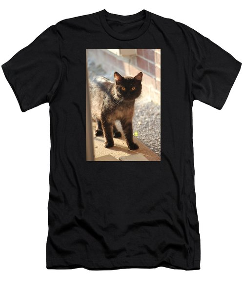 Stray Cat Men's T-Shirt (Athletic Fit)