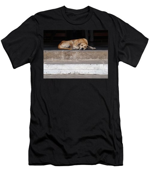 Street Dog Sleeping On Steps Men's T-Shirt (Athletic Fit)