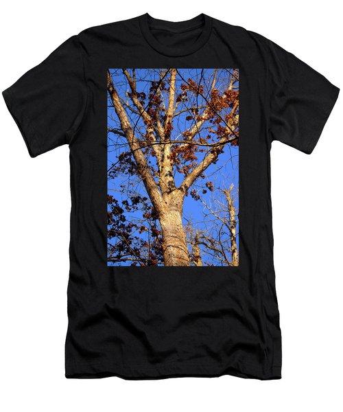 Stunning Tree Men's T-Shirt (Athletic Fit)