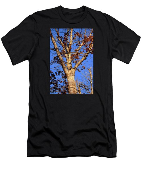 Stunning Tree Men's T-Shirt (Athletic Fit)
