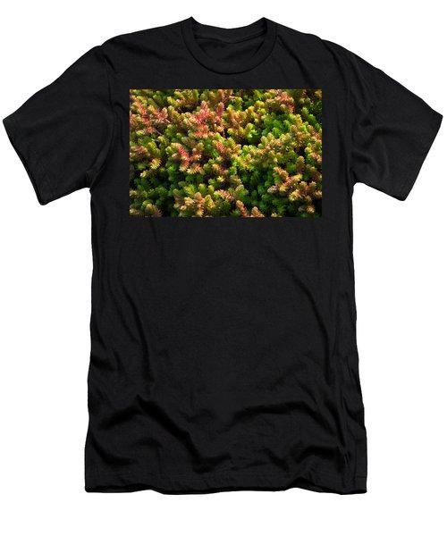 Succulents Men's T-Shirt (Slim Fit) by Catherine Lau