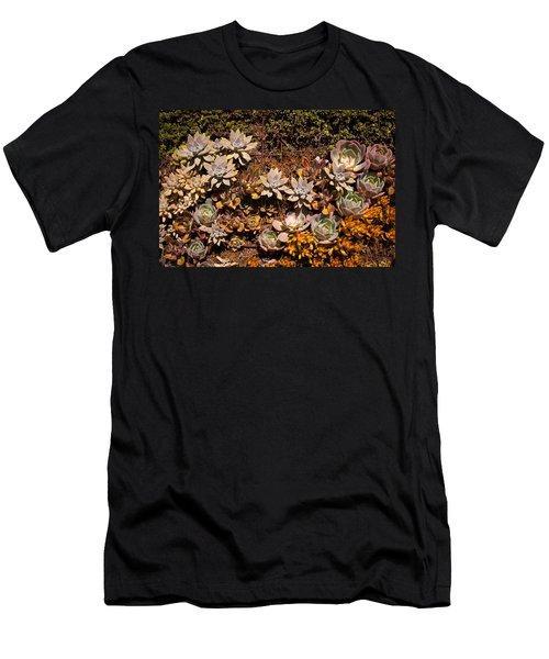 Men's T-Shirt (Slim Fit) featuring the photograph Succulents Vertical Garden by Catherine Lau