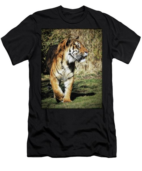 Sumatran Tiger  Men's T-Shirt (Athletic Fit)