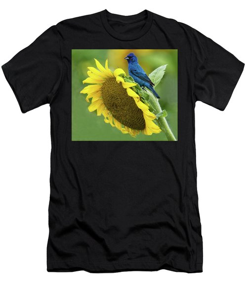 Sunflower Blue Men's T-Shirt (Athletic Fit)
