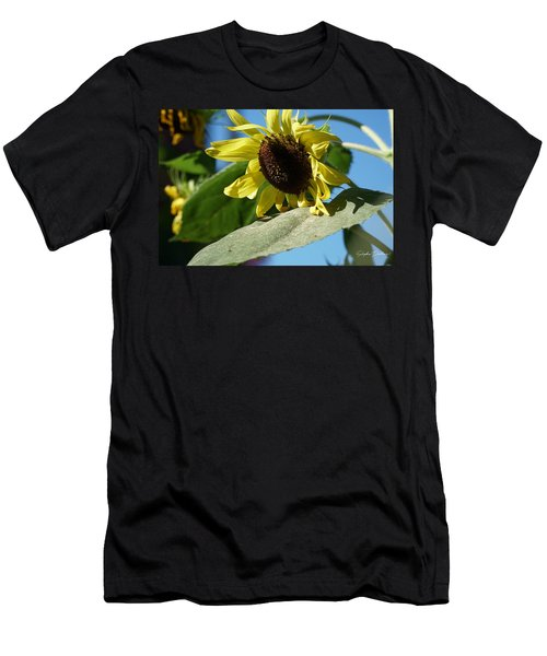 Sunflower, Lemon Queen, With Pollen Men's T-Shirt (Athletic Fit)