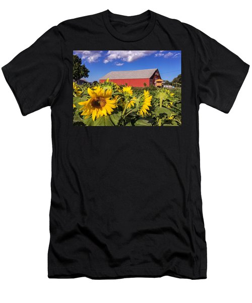 Sunflower Red Barn Men's T-Shirt (Athletic Fit)
