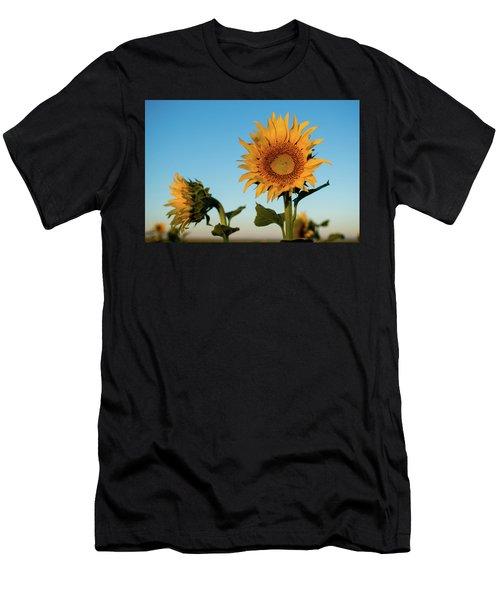 Sunflowers At Sunrise 1 Men's T-Shirt (Athletic Fit)