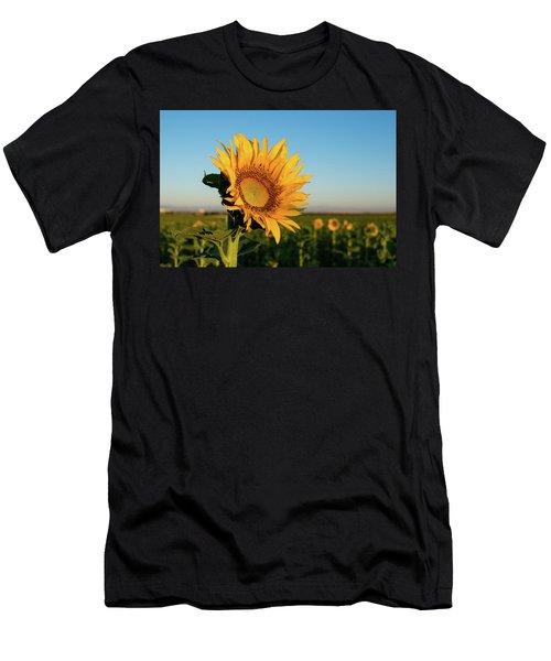 Sunflowers At Sunrise 2 Men's T-Shirt (Athletic Fit)