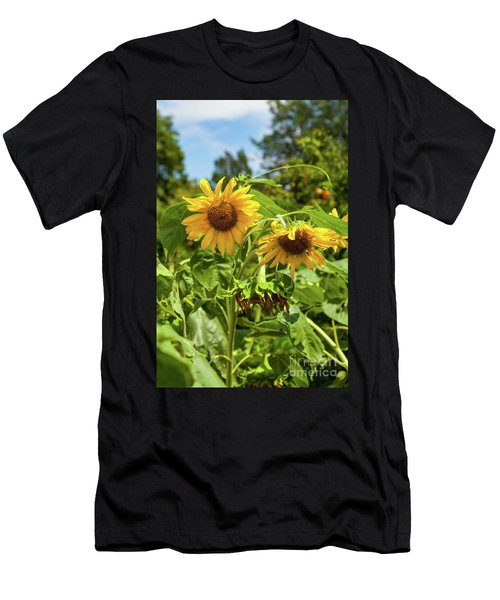 Sunflowers In Sunshine Men's T-Shirt (Athletic Fit)