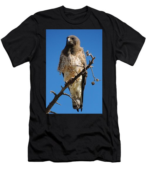 Swainson's Hawk Men's T-Shirt (Athletic Fit)