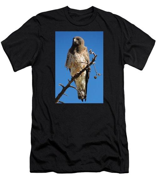 Swainson's Hawk Men's T-Shirt (Athletic Fit)