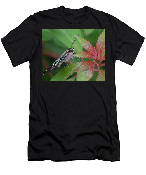 Tailed Jay Butterfly Macro Shot Men's T-Shirt (Athletic Fit)