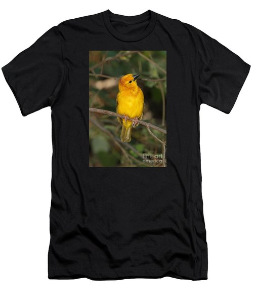 Taveta Golden Weaver Men's T-Shirt (Athletic Fit)